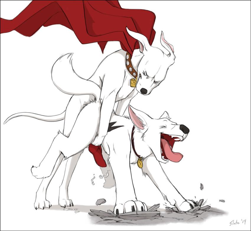 the superdog tusky krypto husky Maria takayama (haganai)